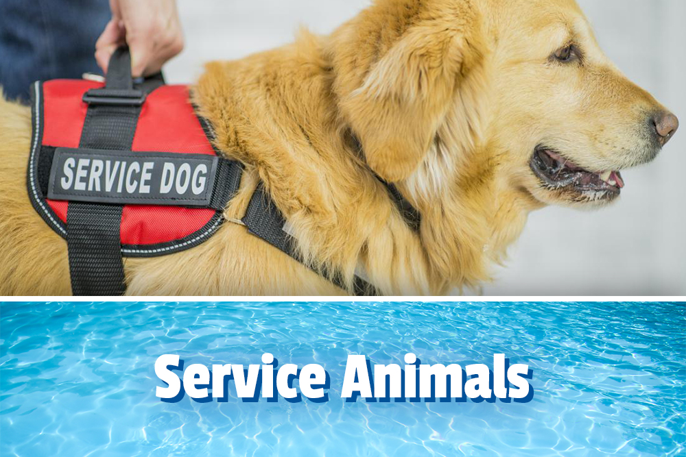 Service animals, Service dog